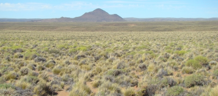 New insight into links between biodiversity and climate change mitigation in global drylands